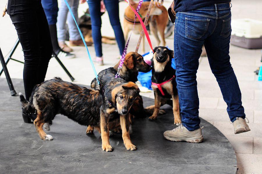 La tenencia de mascotas será fiscalizada. Foto: Aton Chile