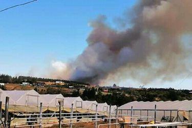 La Araucanía: Onemi declara Alerta Roja en la comuna de Cholchol por incendio forestal