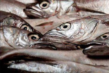 Armadores y pescadores artesanales se unen a Asipes y presentarán querella por pesca ilegal de merluza común