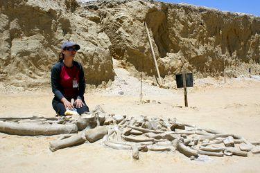 Ballenas, perezosos, megalodones: el inagotable registro fósil del Parque Paleontológico de Caldera ahora será preservado