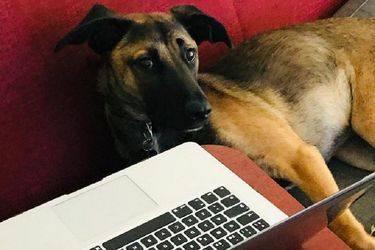Mascotas con fatiga pandémica: ¿El confinamiento prolongado puede afectar la salud de los perros?