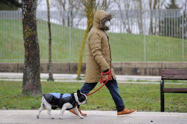 """Transmisión de Covid de animales a humanos es un """"riesgo a largo plazo"""" por lo que perros y gatos podrían necesitar vacunas en el futuro"""