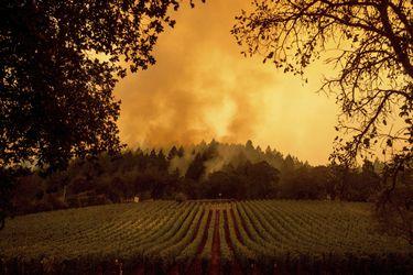 """Los chilenos atrapados por los incendios forestales en EE.UU.: """"El panorama es apocalíptico"""""""