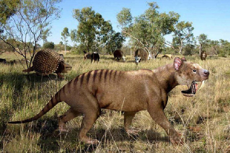 Thylacosmilus_Amerika