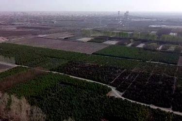 Drone muestra proyecto de replantación de árboles en el desierto de Gobi