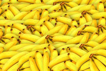 La industria del plátano en alerta: enfermedad fulminante y sin cura podría acabar con la producción de este fruto