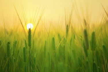Cómo un proyecto ambiental de la FAO en el Maule permitió a los agricultores generar más ganancias, reduciendo el uso de energía, residuos y plaguicidas