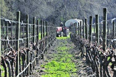 Las viñas miran al sur
