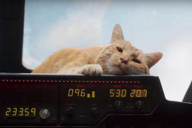 Los gatos de Capitana Marvel tuvieron dificultades en el set con los Skrulls