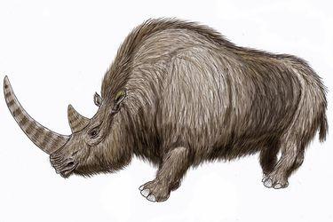 El sorprendente hallazgo en Siberia de un rinoceronte lanudo de la Era del Hielo en perfecto estado