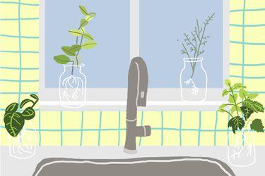 Cómo cultivar tu propio jardín de hierbas aromáticas sin tierra en la cocina