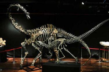dinosaurio museo afp