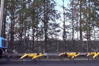 """La impresionante fuerza de los """"perros robots"""" capaces de mover un camión"""