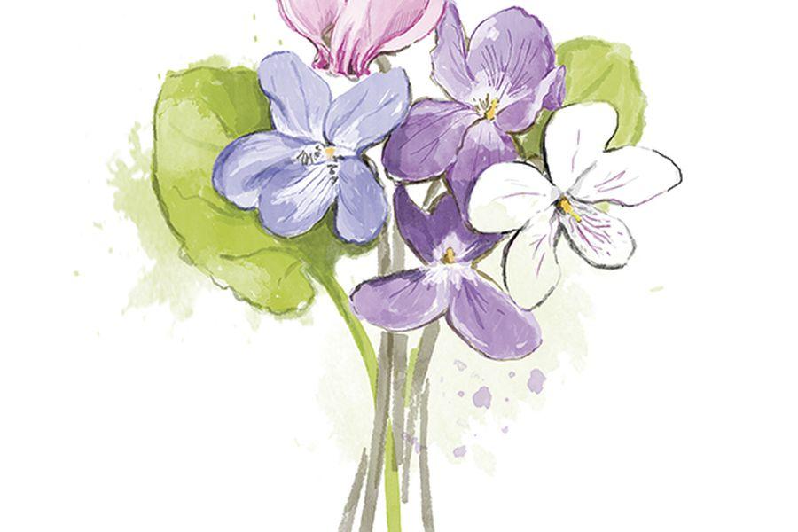 Imagen Violetas