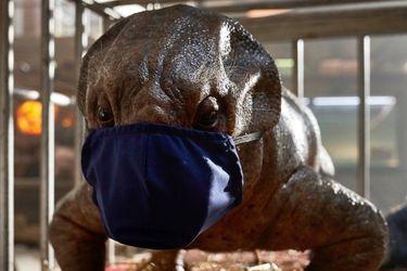 Colin Trevorrow cree que Jurassic World: Dominion será mejor gracias a su filmación en plena pandemia