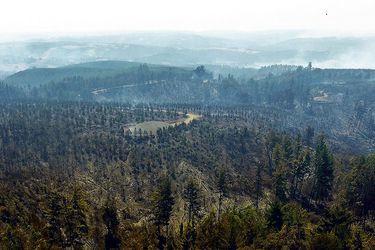 Los predios que ofrecen vender las empresas forestales