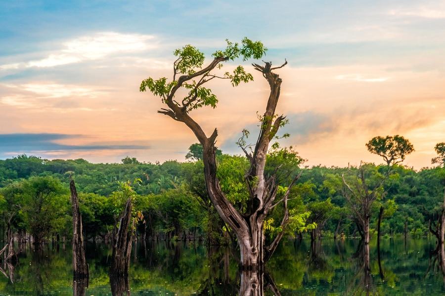 Imagen referencial Amazonas Unplush
