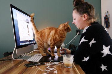 Estudio advierte que personas con Covid tienen altas probabilidades de contagiar a sus gatos