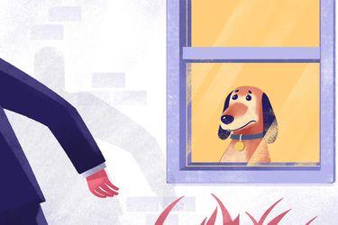 Desconfinamiento y ansiedad por separación: consejos para dejar solo a tu perro
