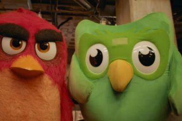 Angry Birds y Duolingo se unen en un crossover entre pájaros