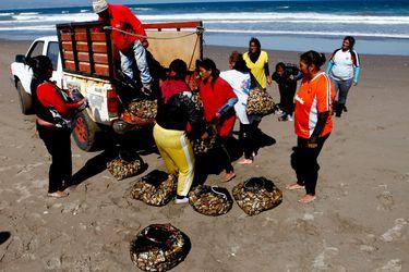 Congreso despacha a ley proyecto que convertiría a Chile en el primer país del mundo en establecer una cuota de género en la Pesca