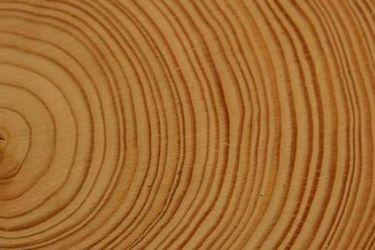 """Científicos chilenos utilizan árboles para crear un """"atlas de sequía"""" de los últimos 600 años en el país y Sudamérica"""