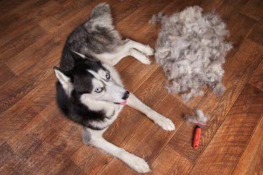 Consejos y productos para lidiar con los pelos de tus mascotas