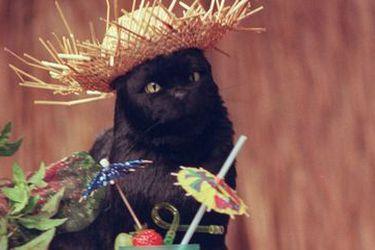 Día Internacional del Gato: cinco felinos que nadie puede olvidar