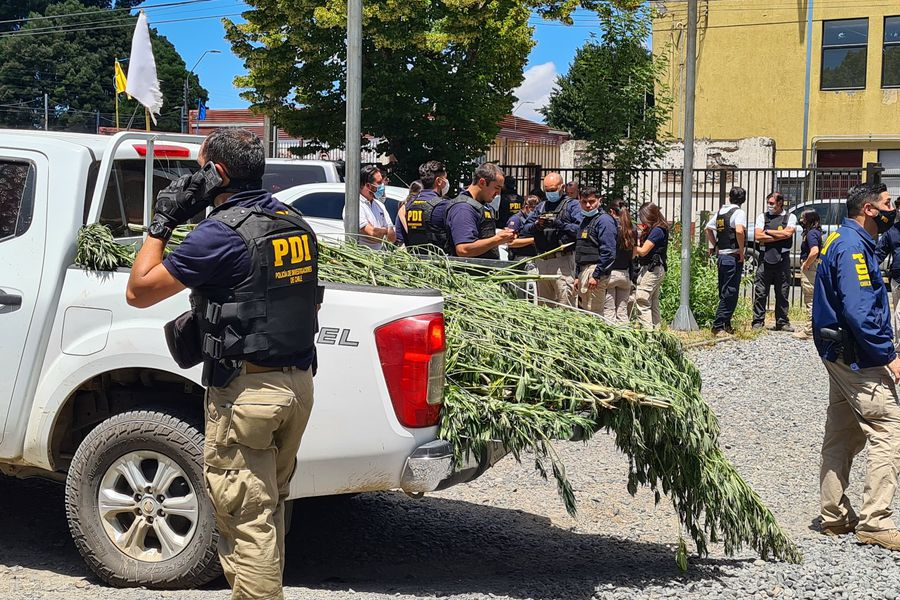 Temucuicui: armas y más de un millar de plantas de marihuana fueron incautadas en operativo en que resultó muerto subinspector de la PDI - La Tercera