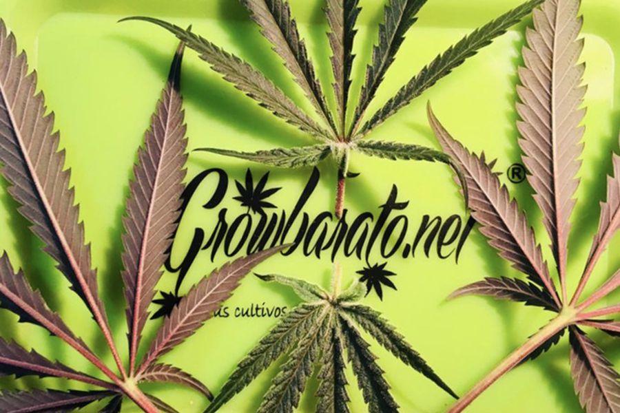 publi-marihuana