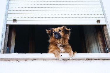 Mascotas vs administradores de edificios: lo que debes saber antes de adoptar si vives en departamento