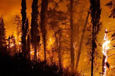 Onemi declara Alerta Roja para las comunas de Talca y Pencahue por incendio forestal