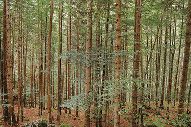 La Wood Wide Web o la gentil inteligencia de los árboles