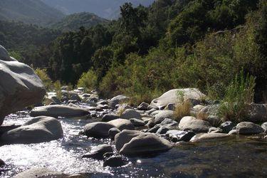 Estudio muestra que temperaturas extremas afectan los ecosistemas de los ríos
