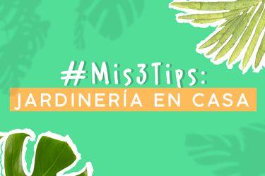 Daniela Maldonado de @ElJardinista explica cómo hacer jardinería en casa.