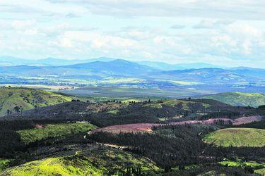 La Araucanía: traspaso de tierras divide a actores de la región