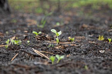 Plantar bosques en todo el mundo contra el cambio climático es ineficaz