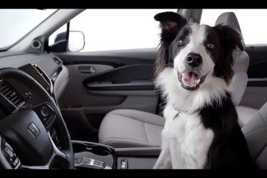 Honda se pliega a Subaru y recurre al 'mejor amigo del hombre' para promocionar el SUV Pilot