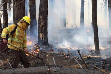 Incendio forestal en la Reserva Nacional Lago Peñuelas consume al menos 15 hectáreas