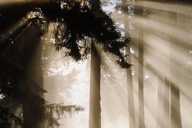 El inmenso poder de los bosques del sur: estudio detecta que almacenan tres veces más carbono por hectárea que la Amazonía
