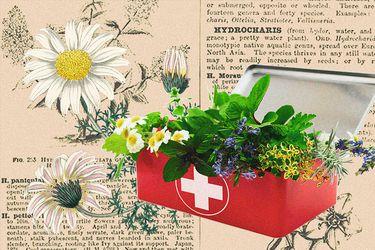 Cinco plantas que podemos mantener en casa como un botiquín natural
