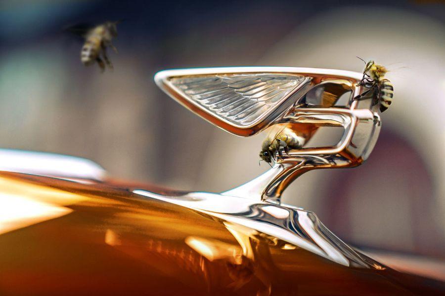Flying Bees (HERO)