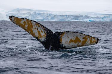 National Geographic y su viaje al fin del mundo para proteger la Antártica