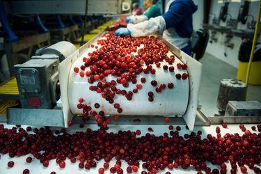 El balance de la temporada de los exportadores chilenos de cerezas a China tras polémica generada en redes sociales
