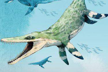 Siete metros y una mordida más poderosa que la de un tiranosaurio rex: descubren en el norte colosal reptil marino de la era de los dinosaurios