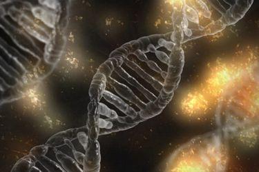 ¿Puede un trasplante de médula cambiar el ADN? El insólito caso de un paciente con leucemia