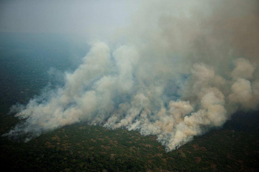 amazonia 22 web