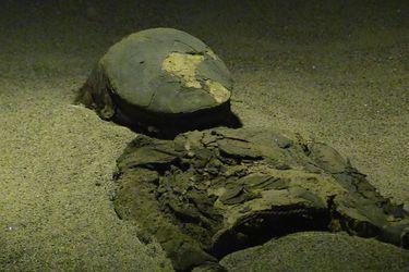 Unesco incluye asentamientos y momificación artificial de la Cultura Chinchorro en la Lista de Patrimonio Mundial