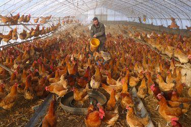 El aumento de los casos de gripe aviar en humanos en China tras peligrosa mutación hace temer el inicio de una nueva pandemia