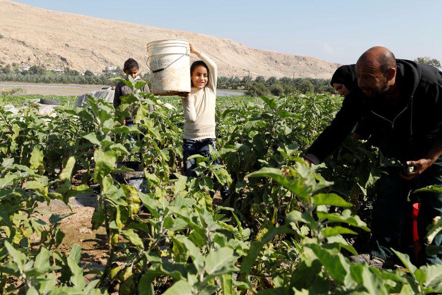 Campesinos Palestinos web